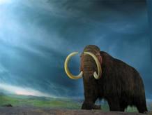 Reconstruccción del Mamut lanudo en el Museo Real de la Columbia Británica
