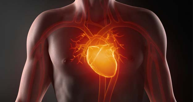 Recreación del corazón.