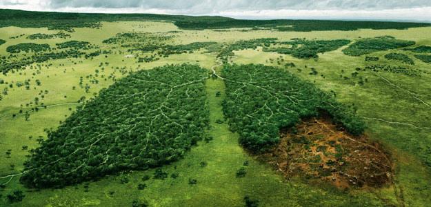 Los recursos de la Tierra para este año se agotan el 21 de agosto y empezaremos a 'vivir a cuenta'