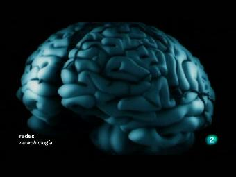 Ver v?deo  'Redes - El cerebro masculino'