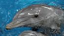 Redes - Entender a los delfines - ver ahora