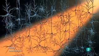 Ver vídeo  'Redes - Modificar el cerebro con luz'