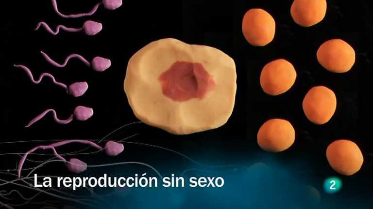 Redes - La reproducción sin sexo