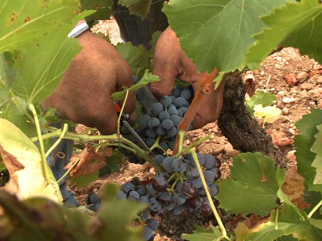 Destino: España - La Rioja II
