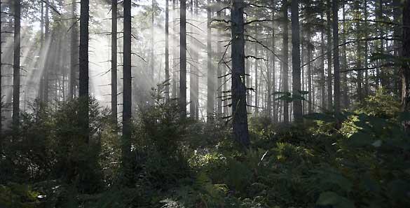 Los bosques, que contienen el 80% de la biodiversidad del planeta, pierden, anualmente, trece millones de hectáreas