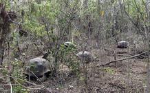 Los investigadores han descubierto rastros genéticos de la especies supuestamente extinguida en ejemplares que vivían en una isla cercana