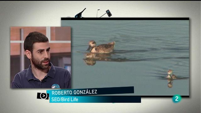 Para Todos La 2 - ONG: Seo Bird Life
