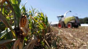 Ver vídeo  'Sequías e inundaciones amenazan con crear otra crisis alimentaria mundial'
