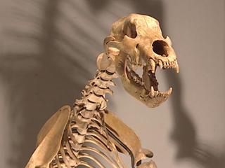 Ver vídeo  'Sotheby's saca a la venta más de 80 lotes de esqueletos y fósiles con millones de años y a precios millonarios'