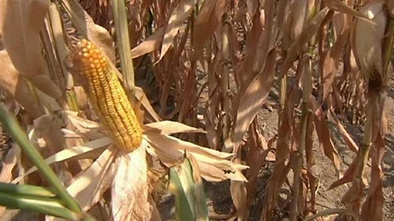 En tan solo un mes los precios de los alimentos han subido un 6 %