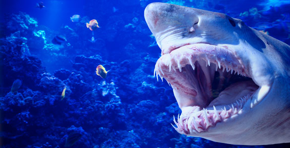 Los tiburones no aprecian los colores, ven en blanco y negro