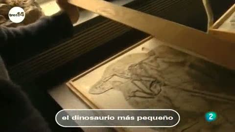 Ver v&iacute;deo  'tres14 - Curiosidades cient&iacute;ficas - El dinosaurio m&aacute;s peque&ntilde;o'