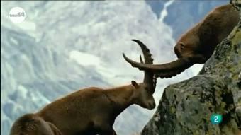 Ver vídeo  'tres14 - curiosidades científicas - Resucitar las especies'