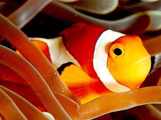 Ver vídeo  'tres14 - Curiosidades - ¿Los peces de colores tienen poca memoria?'