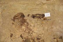 Uno de los millones de perros encontrados en las catacumbas egipcias