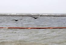 Una de las barreras absorventes instaladas para extraer el petróleo que se aproxima hacia las orillas del estado de Luisiana, Estados Unidos.