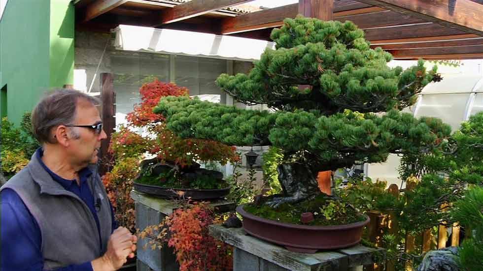 Aqu la tierra los jardineros de los bons is aqu la - Tierra para bonsais ...