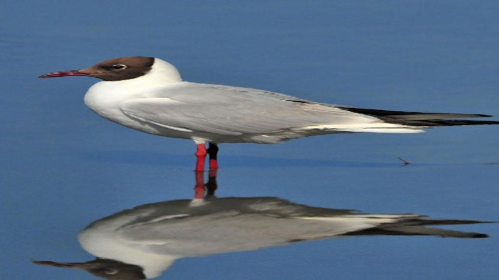Diez millones de aves mueren cada a�o en pa�ses del Mediterr�neo y ...